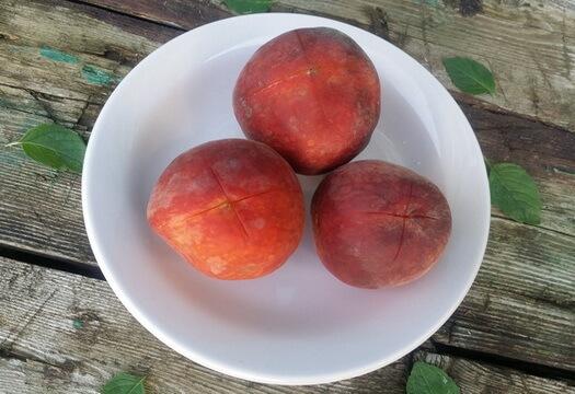 Сделайте крестообразные надрезы на кожице персиков